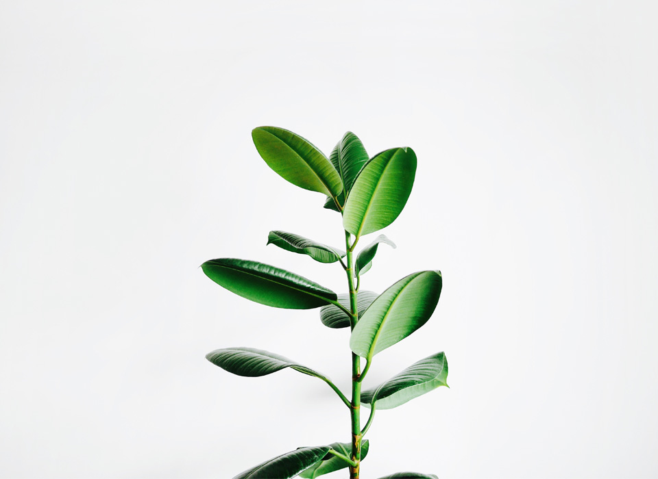 A plant in the workspace